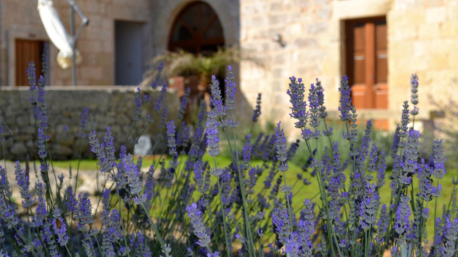 Masseria San Cosimo lavanda